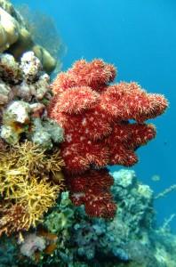 Snorkeling around Menjangan Island Bali