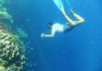 Snorkeling Around Menjangan Island, Bali