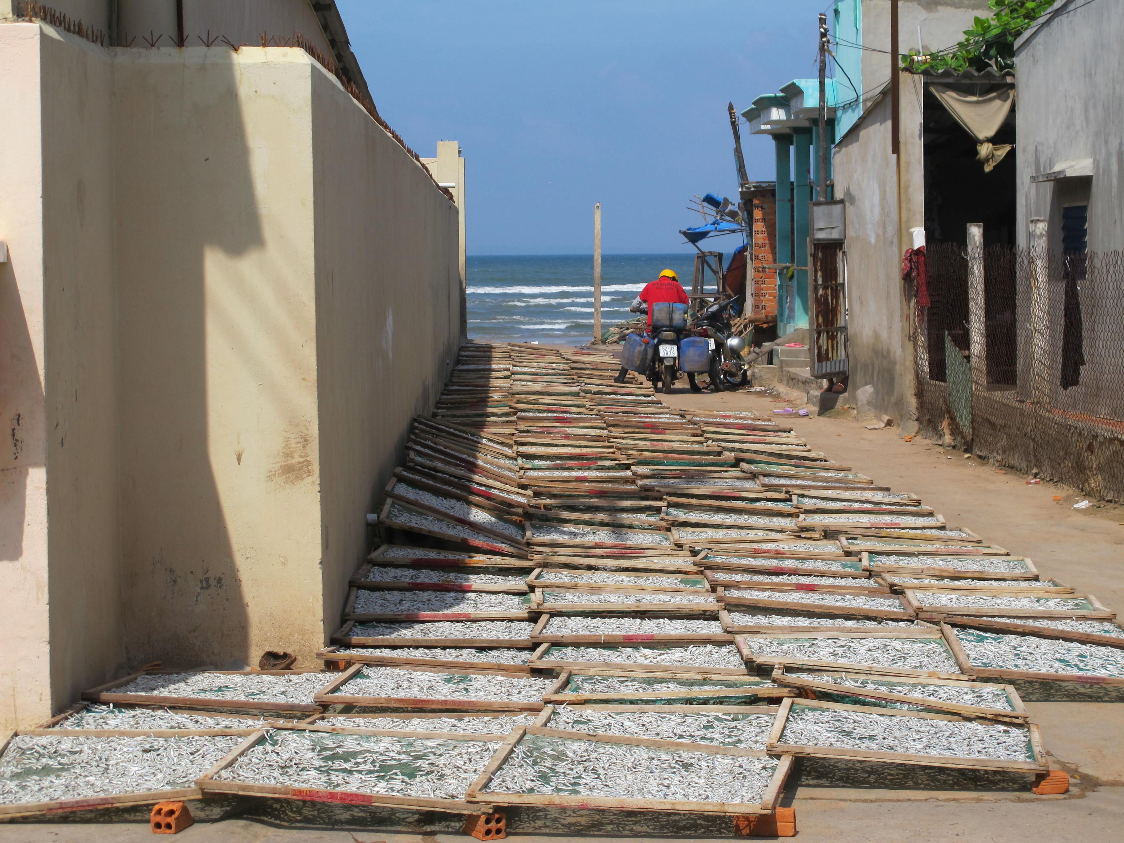 Fish Drying Mui Ne Vietnam