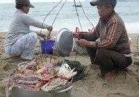 Video: Seafood on the beach in Nha Trang