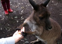 Healesville Sanctuary Victoria