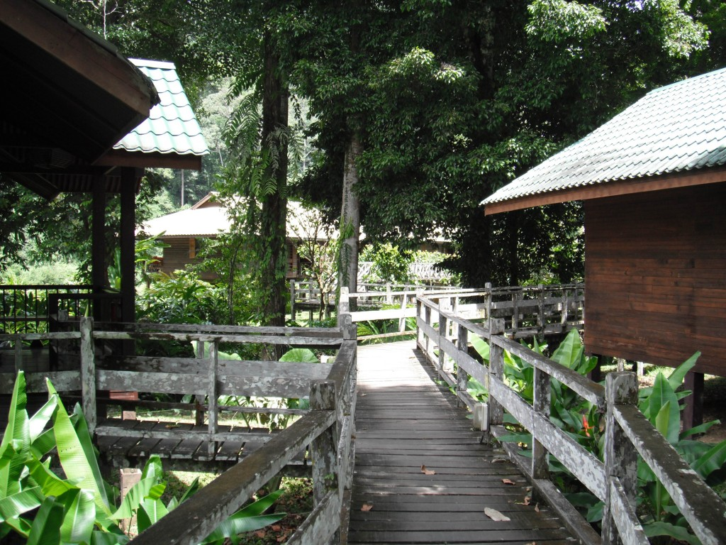Borneo Rainforest Lodge Danum Vallely