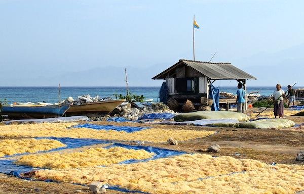Seagrass Farming Nusa Lembongan