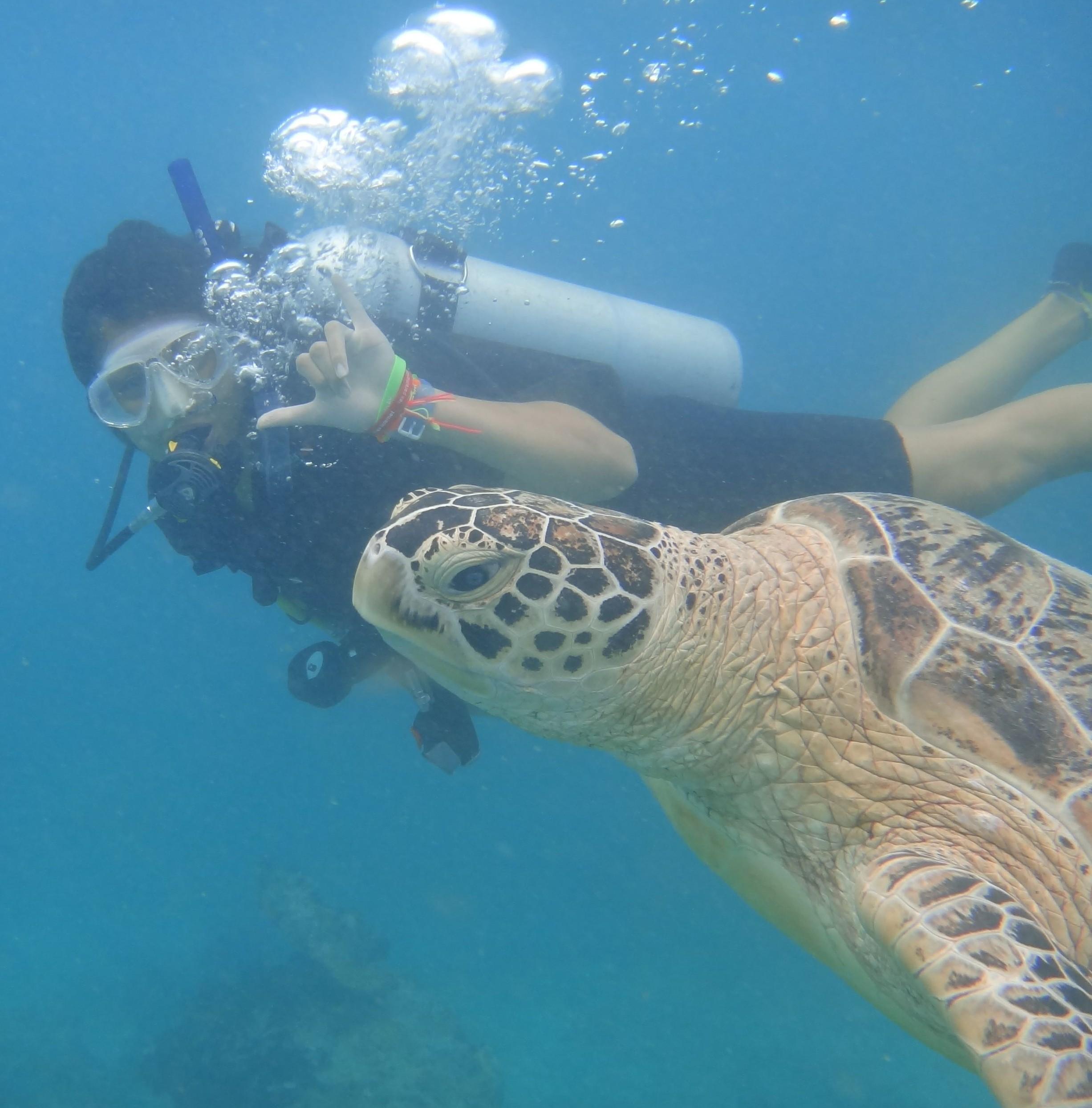 Malaysia Beaches: Diving Sipadan Malaysia: An Experience Of A Lifetime