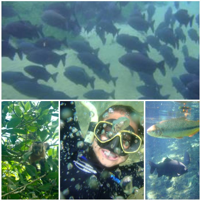 Fresh Water Snorkeling in Rio de Prata Brazil