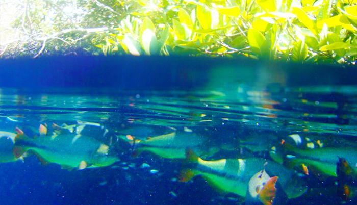 Rio de Prata Snorkeling