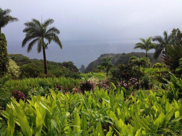 The Garden of Eden Botanical Garden Arboretum