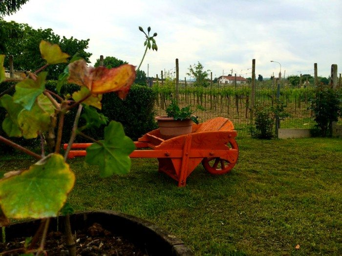 Montepulciano Vineyard Tuscany Italy copy