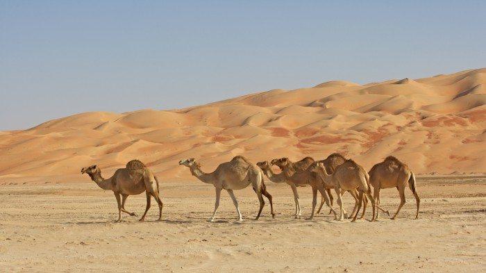 Abu Dhabi Dessert Safari