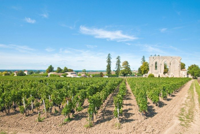 Vineyard of Saint-Emilion, France