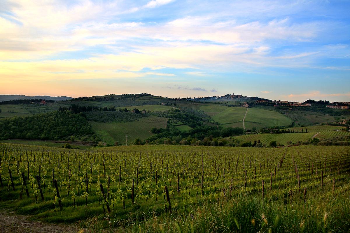 Tuscan Hillside Chianti