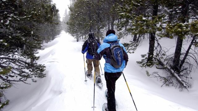 7 of Vancouver's Best Winter Activities