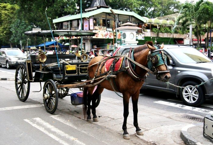 Travel by Local Transport - Things to do in Yogyakarta, Indonesia
