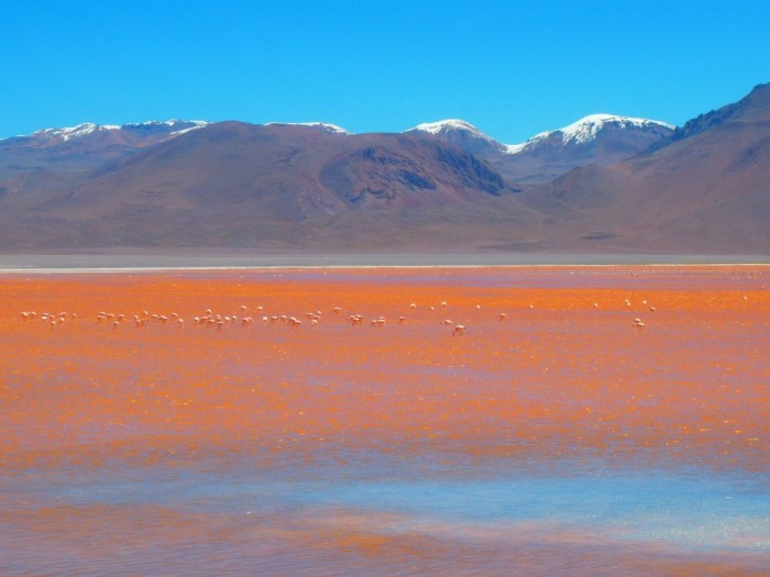 Best of South America-Solar De Uyuni, Salt Flats Bolivia