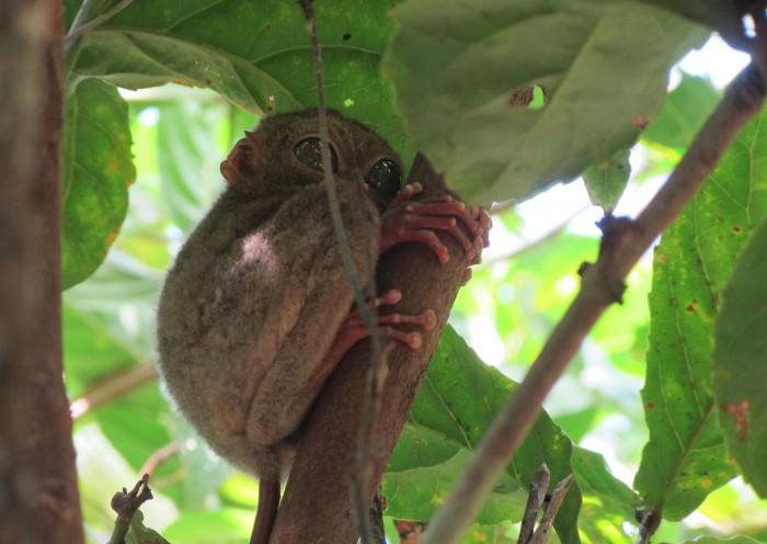 Belitung Island Hidden Paradise Wildlife