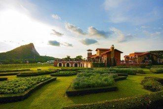 Pattaya's Top Activities - Silverlake Vineyard Pattaya
