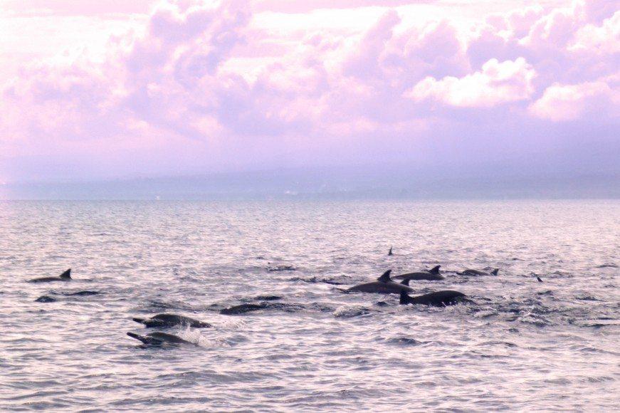 Dolphins in Lovina Bali Indonesia