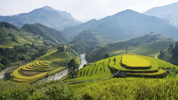 Rice Fields in Sapa Vietnam