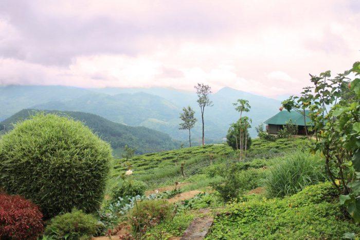 Tea factory in Kandy Sri Lanka