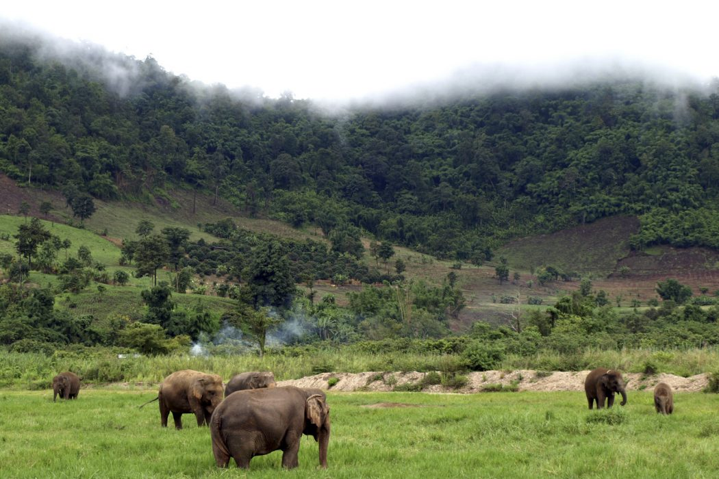 Elephant Sanctuaries Chiang Mai Thailand