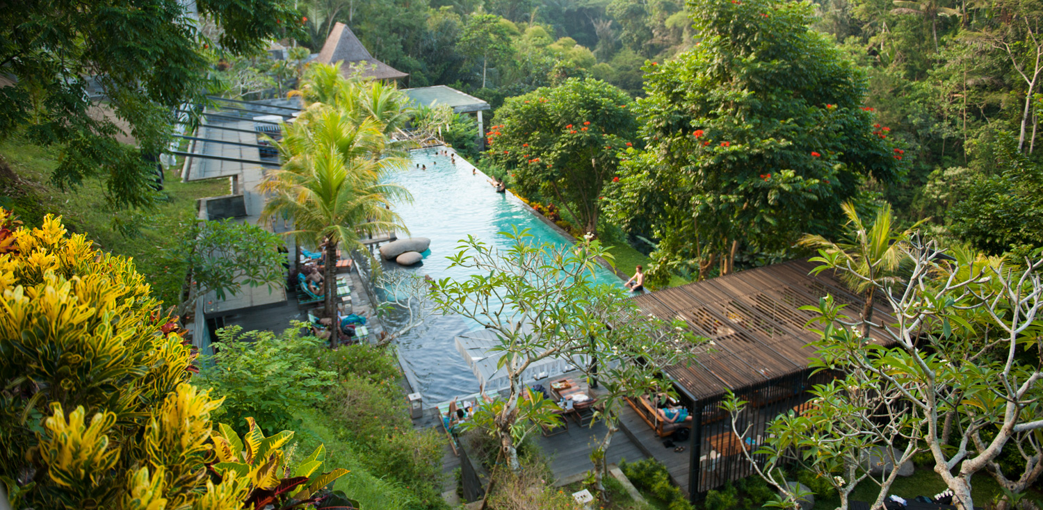 jungle fish bali ubud infinity pool
