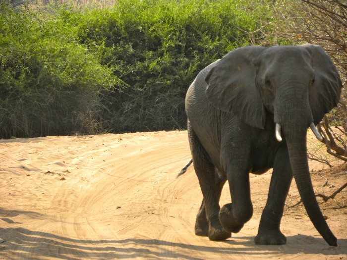 3 day safari in Botswana Africa in Chobe National Park