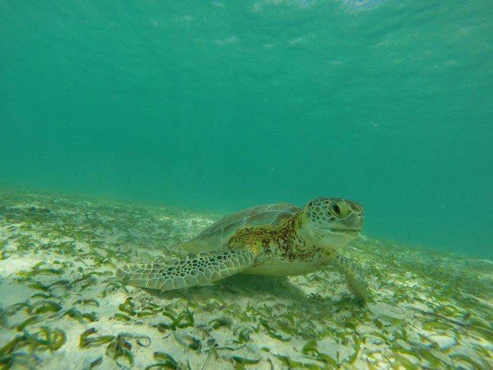Playa de Akumal Cancun Side Trip