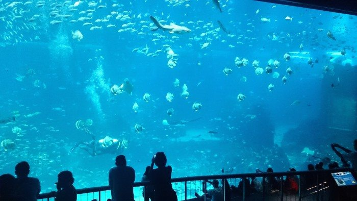 SEA_aquarium Singapore