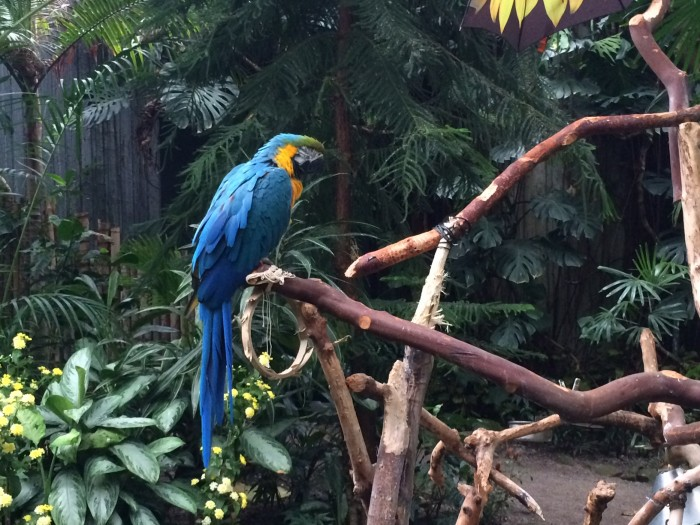 Bloedel Conservatory Vancouver Kids Activities