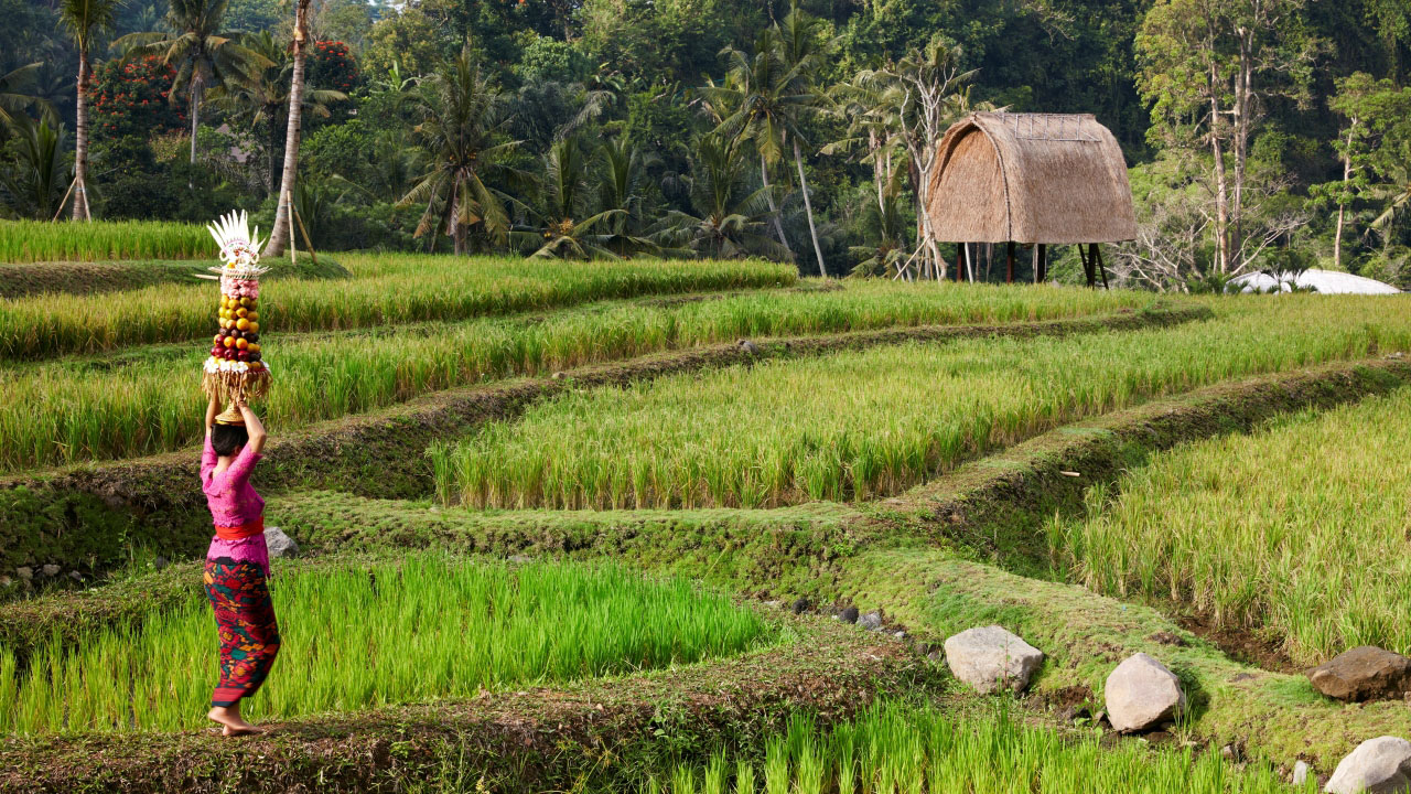 Haze Escape to Mandala by Ritz Carlton Ubud Bali