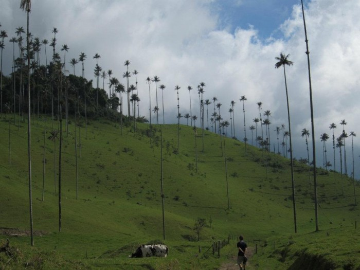 Best of South America- Valle De Cocora- Salento, Colombia