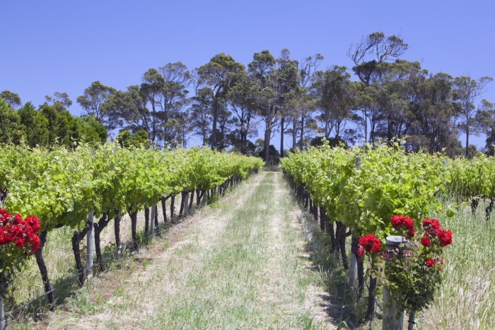 Margaret River-Short Day Trips from Perth