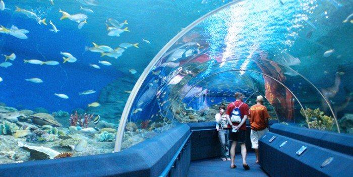 Pattaya's Top Activities - Underwater World Pattaya