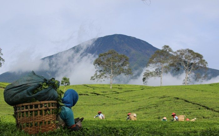 Pagar Alam- Mount Dempo- Indonesia
