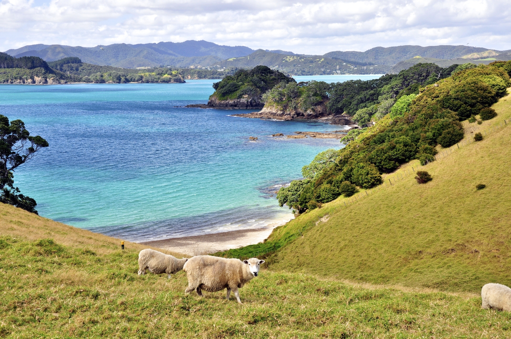 Bay of Islands-Top Reasons to Visit New Zealand
