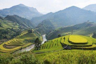 Rice Fields in Sapa Vietnam