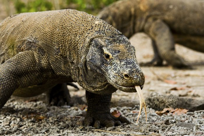 Guide to Visiting Komodo National Park