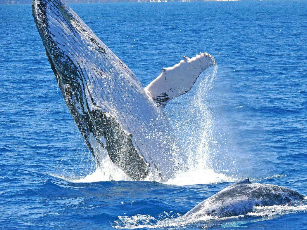 Whale Watching - Spring in Perth, Australia