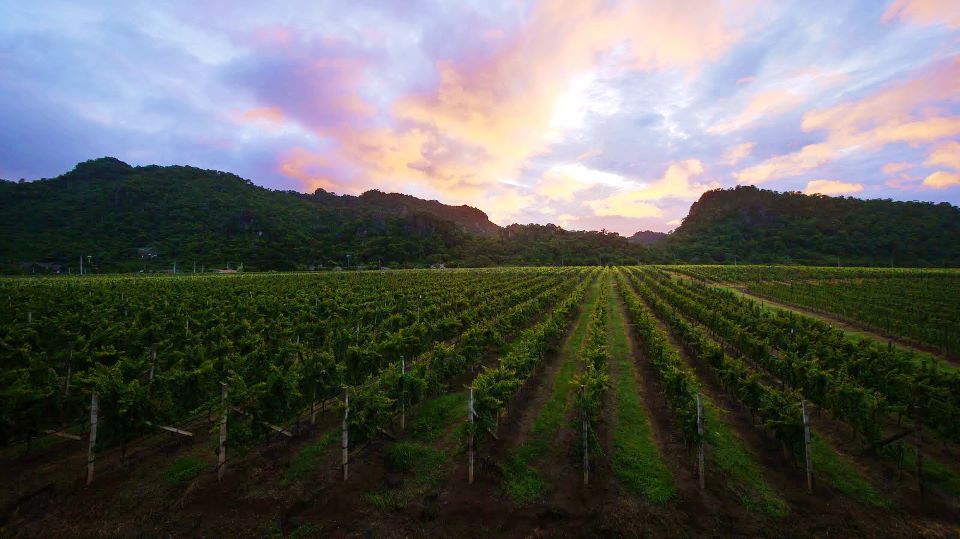 Top wineries in Asia GranMonte Vineyard and Winery in Thailand