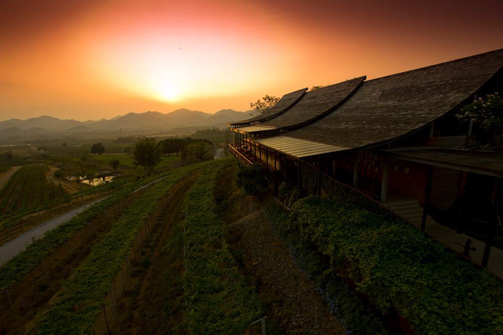 Top Wineries in Asia Hua Hin Hills Vineyard