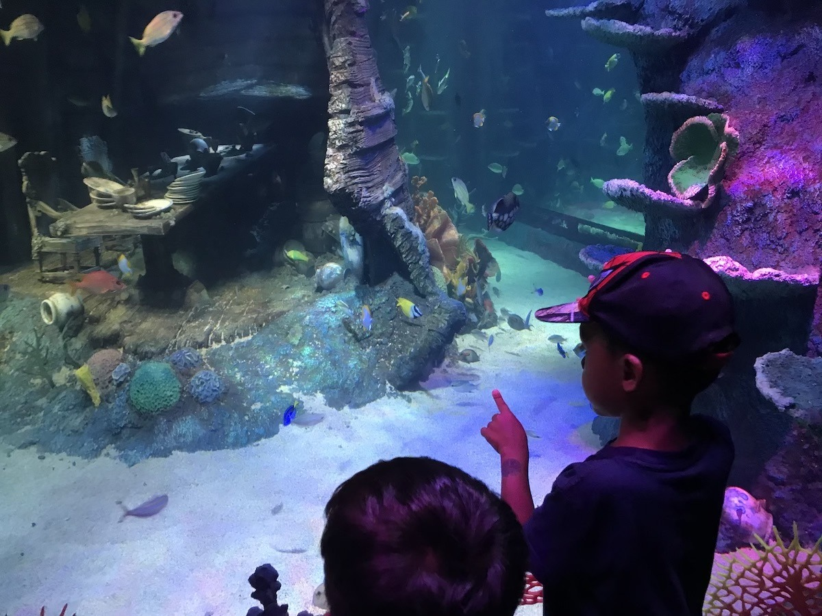 Sea Life Malaysia review - Aquarium by Legoland