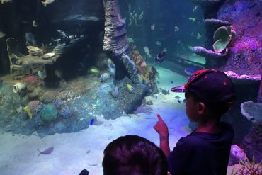 Legoland Sea Life Malaysia Aquarium Review
