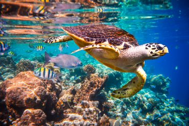 maldives resorts with best house reefs